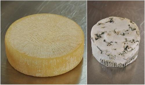 Padulano Cheeses