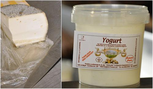 Padulano Cheese and yogurt