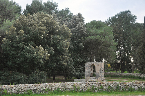 Olive Grove of the Masseria